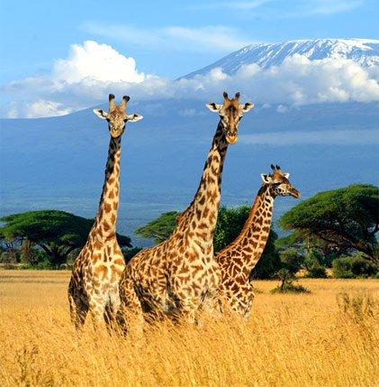 Африк тивийн аялал