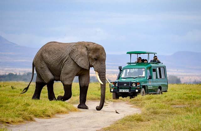 Африк аялал Кени