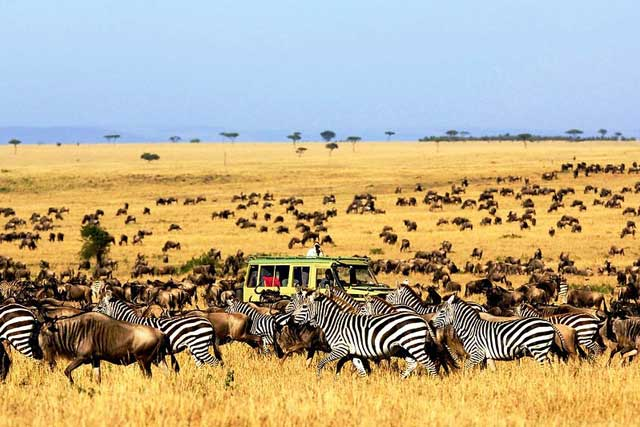 Африкийн Аялал Сафари