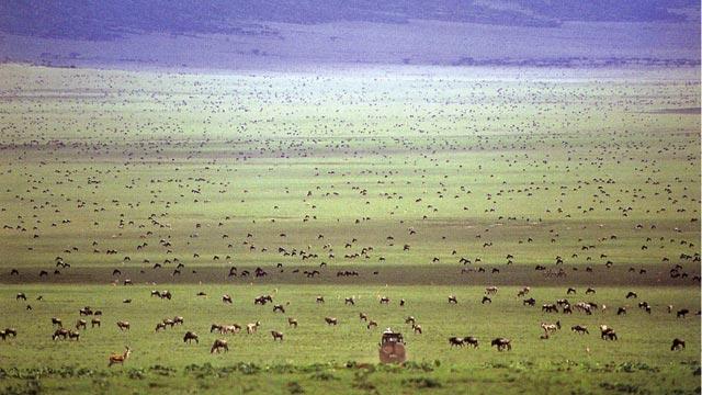 Африкийн Аялал Их Нүүдэл
